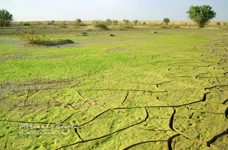 Deserts of saudi arabia cracked ground sciox Images