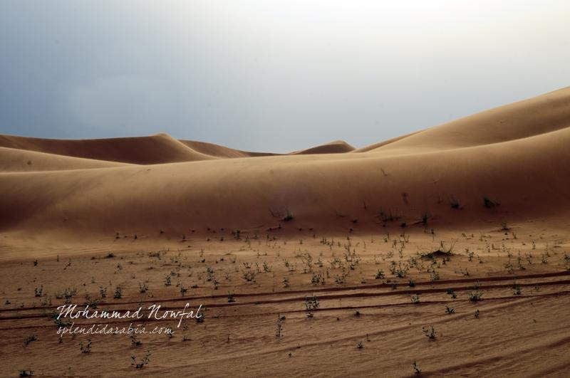 dahnah-desert