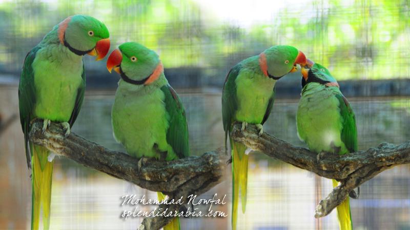 parrots-riyadh-zoo2