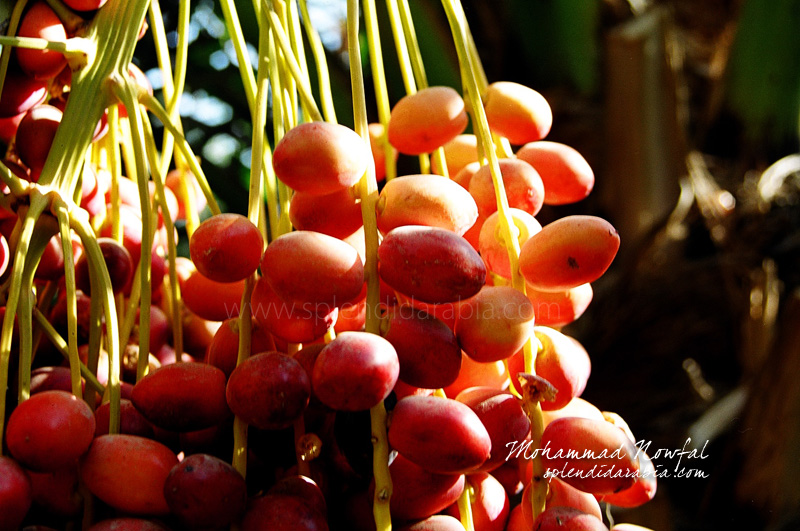 red-dates copy