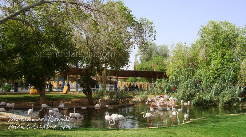 riyadh-zoo-flamingoes