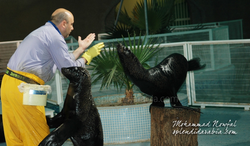 seals-riyadh-zoo